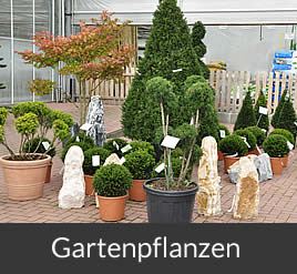 Brinkmann Oelde - Gärtnerei, Gartenpflanzen