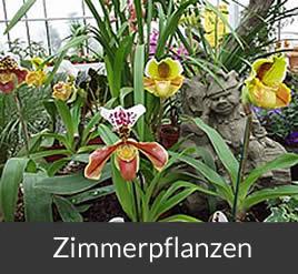 Brinkmann Oelde - Gärtnerei, Zimmerpflanzen