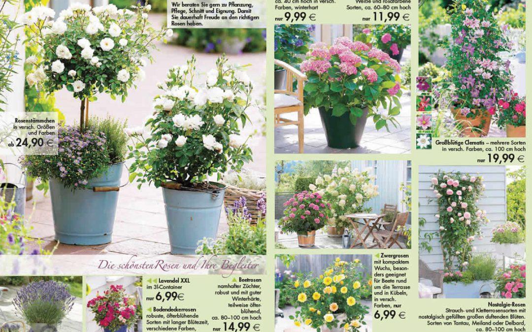 Die schönsten Rosen & vieles mehr