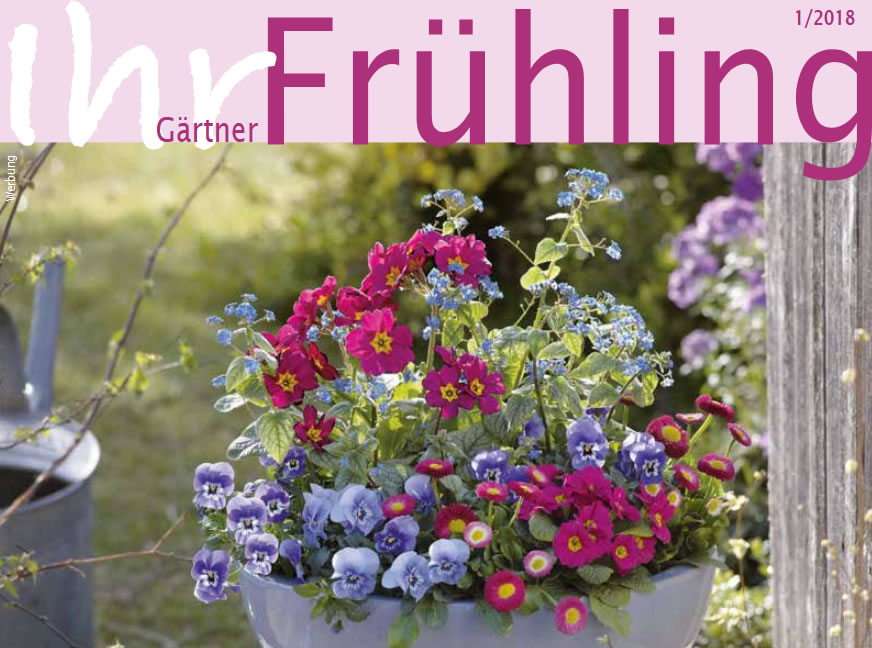 Jetzt wird's bunt - Ihr Gärtner Frühling bei Brinkmann Oelde
