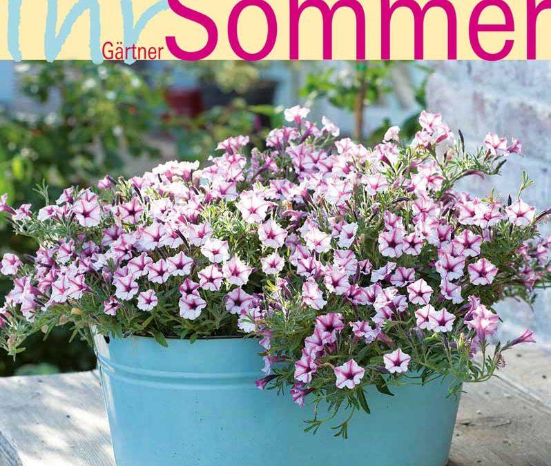 Noch mehr Farben – Ihr Gärtner-Sommer