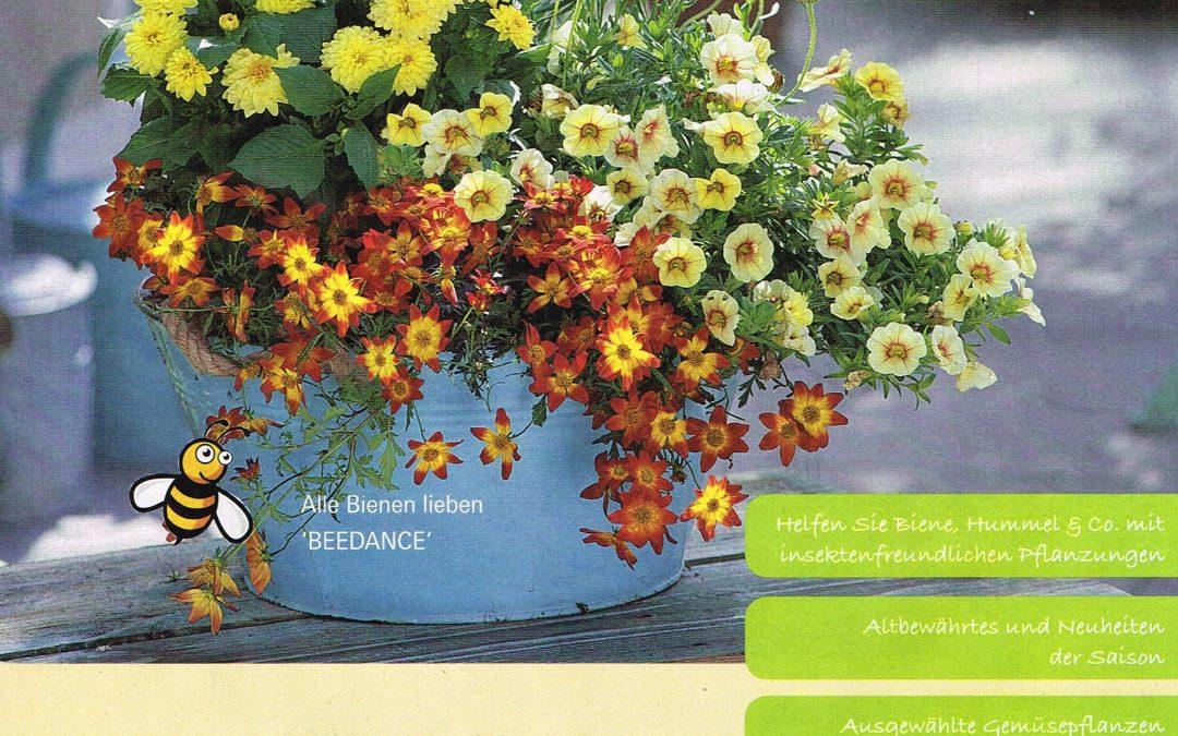 Bienenfreundliche Sommer-Pflanzen